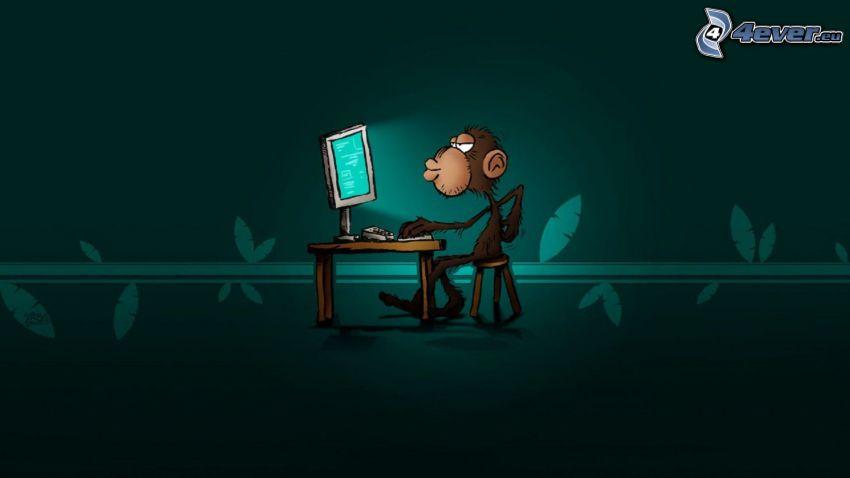 małpa, komputer