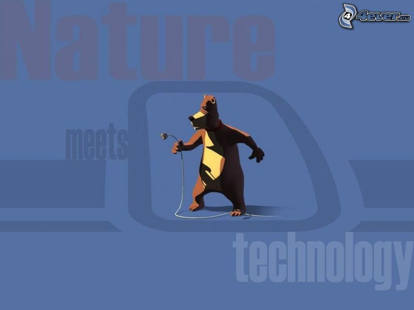 niedźwiedź, przyroda, technologia