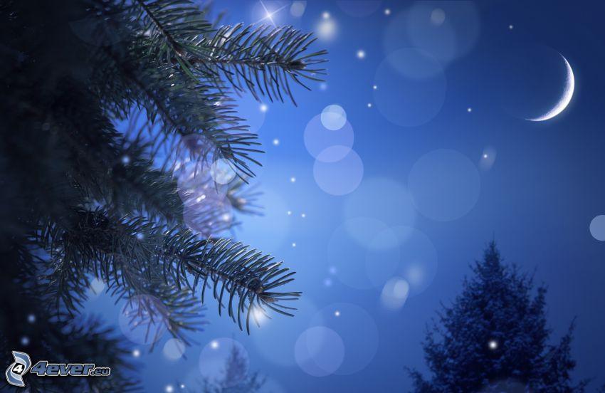 noc, księżyc, drzewa iglaste, kółka