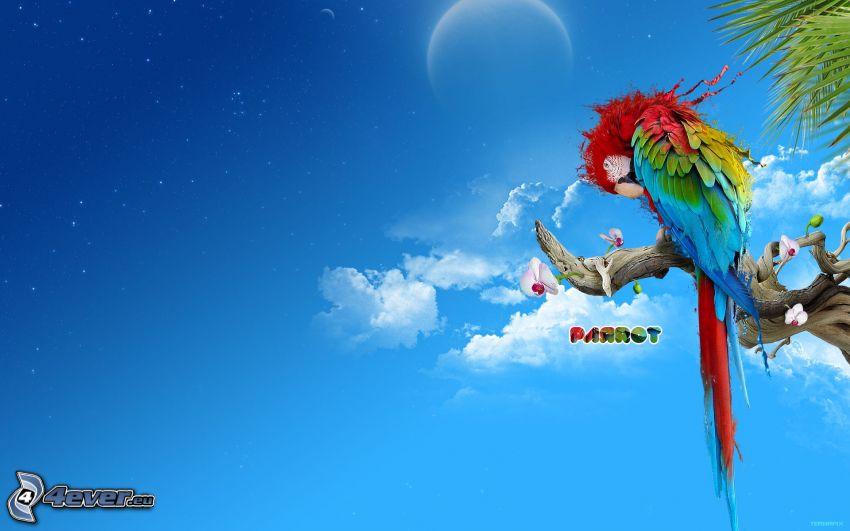 papuga, niebo