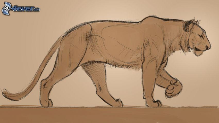 gepard, rysowane