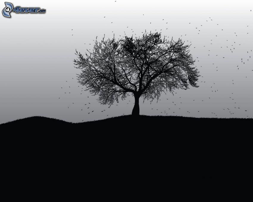 samotne drzewo, czarno-białe
