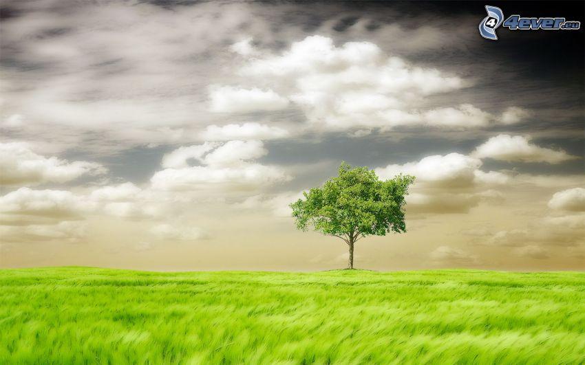 samotne drzewo, trawa, chmury