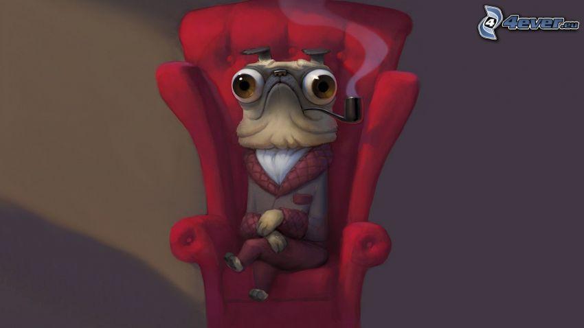 śmieszne zwierzątko, fajka, fotel