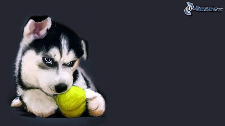 szczeniak Husky