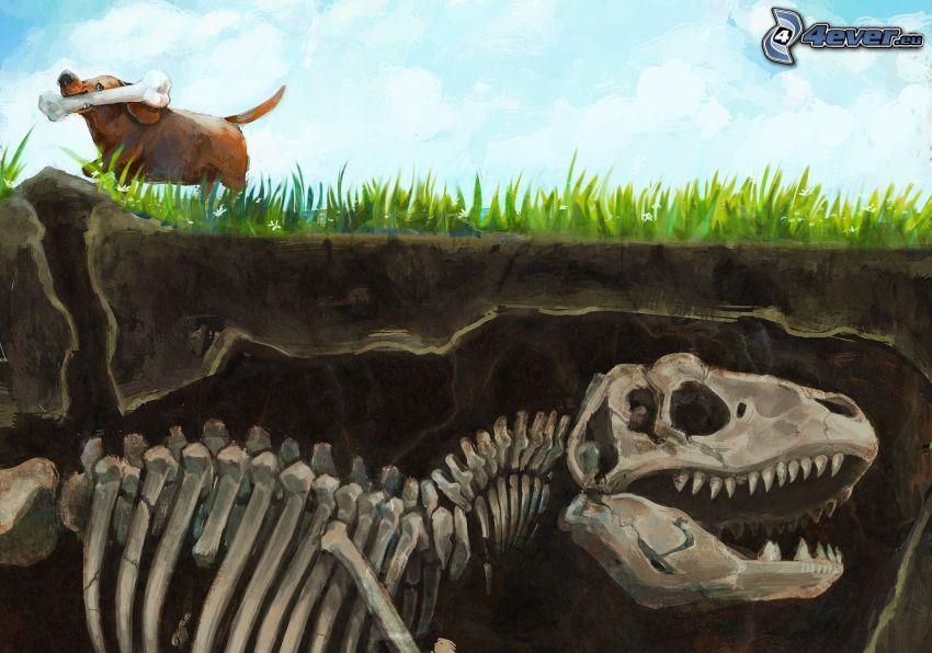 szkielet, dinozaur, brązowy pies, kość