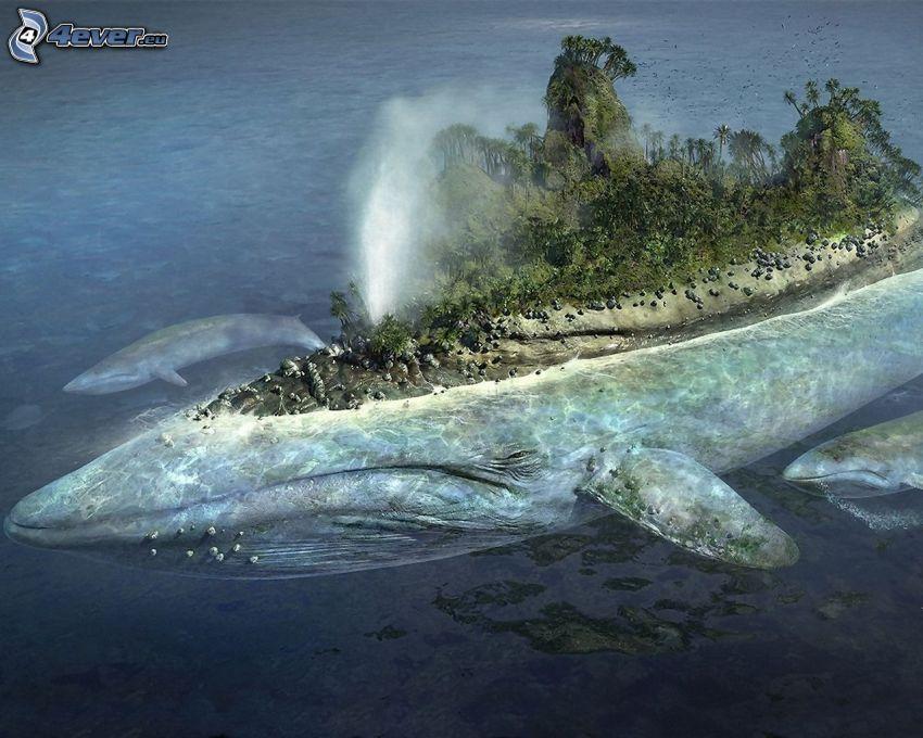 wyspa, wieloryby, dżungla