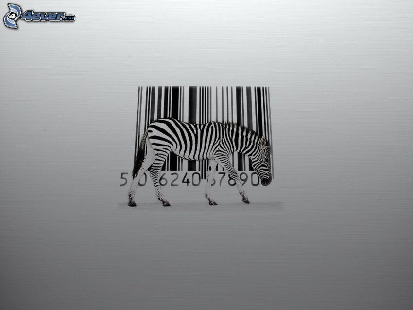 zebra, kod kreskowy