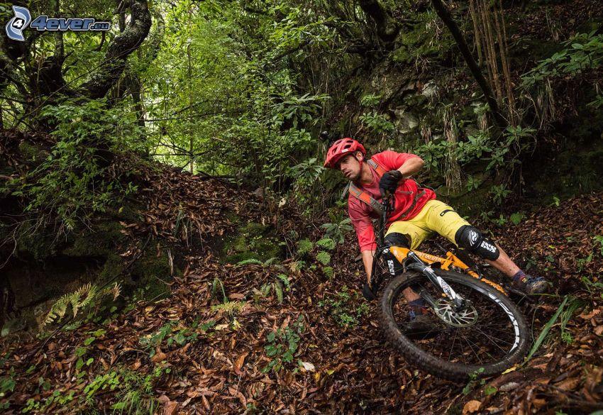 mountainbiking, las, suche liście