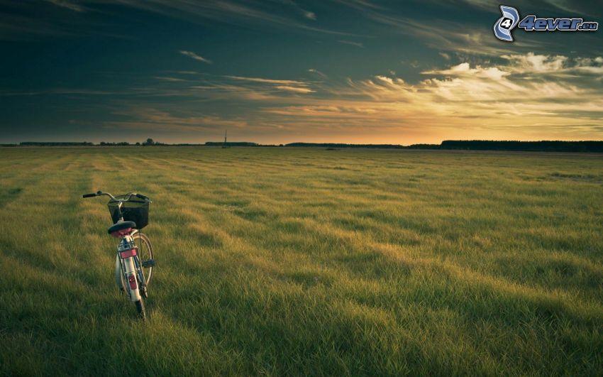 rower, łąka, niebo