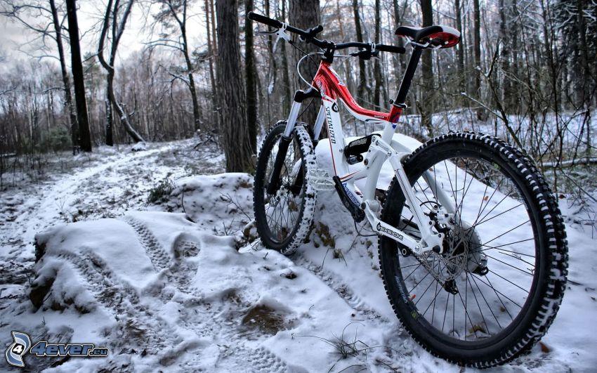 rower górski, las, ślady w śniegu