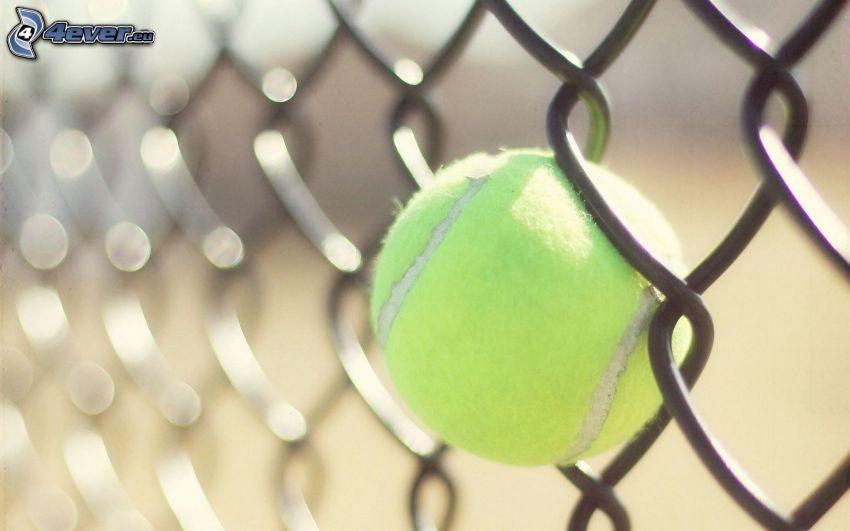 piłeczka tenisowa, ogrodzenie z drutu