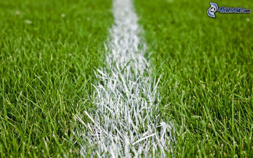 biała linia, boisko