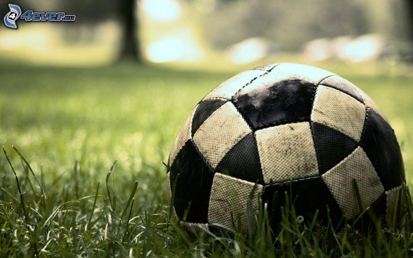 Piłka do nogi, trawa