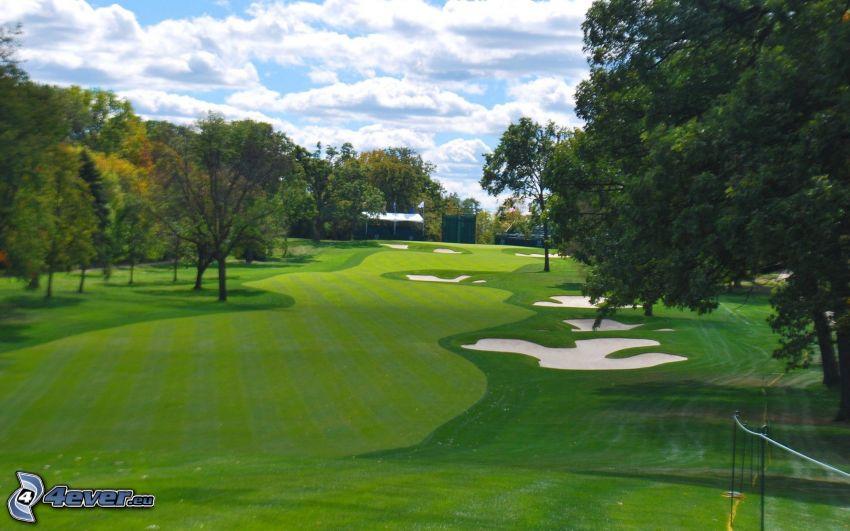 pole golfowe, drzewa