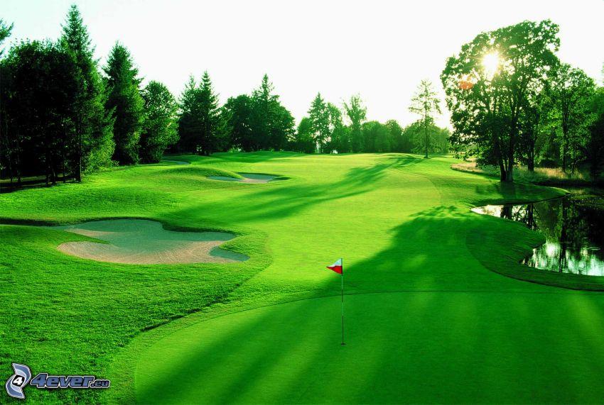 pole golfowe, zachód słońca za drzewem, drzewa iglaste