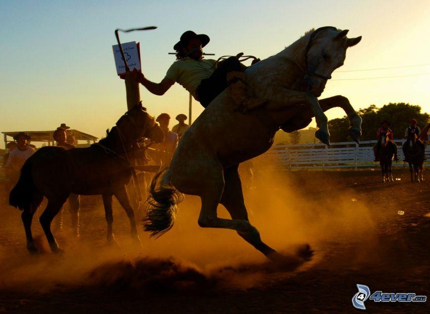 rodeo, koń, kowboj