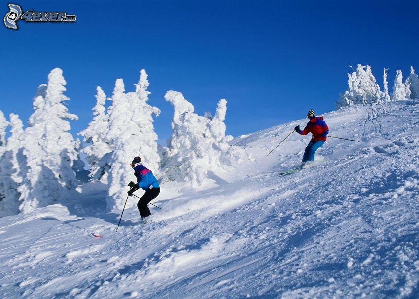 narciarstwo, śnieg, ośnieżone drzewa