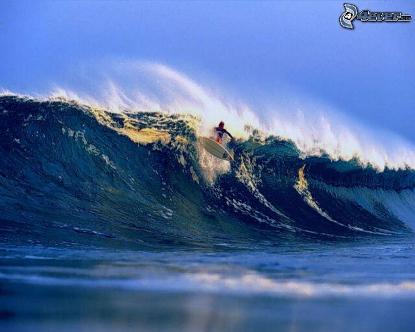surfowanie