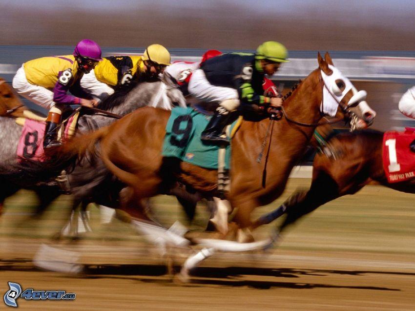 wyścigi, brązowy koń