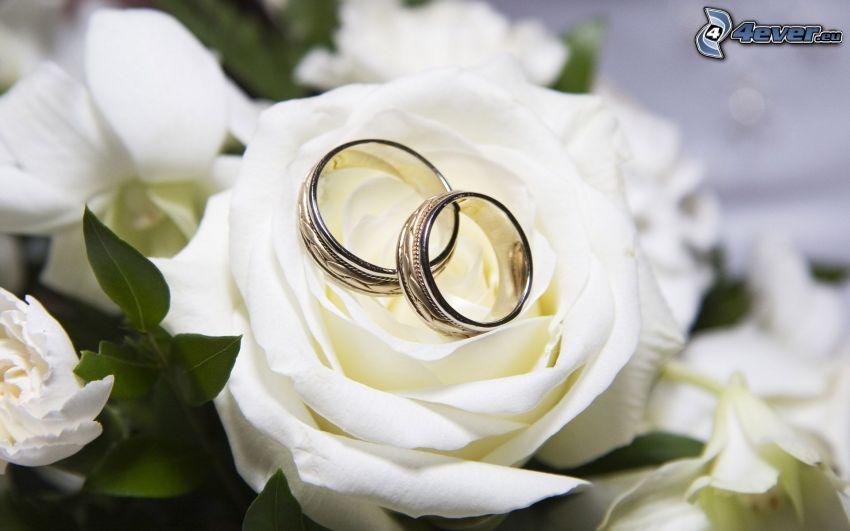 obrączki, biała róża, białe kwiaty