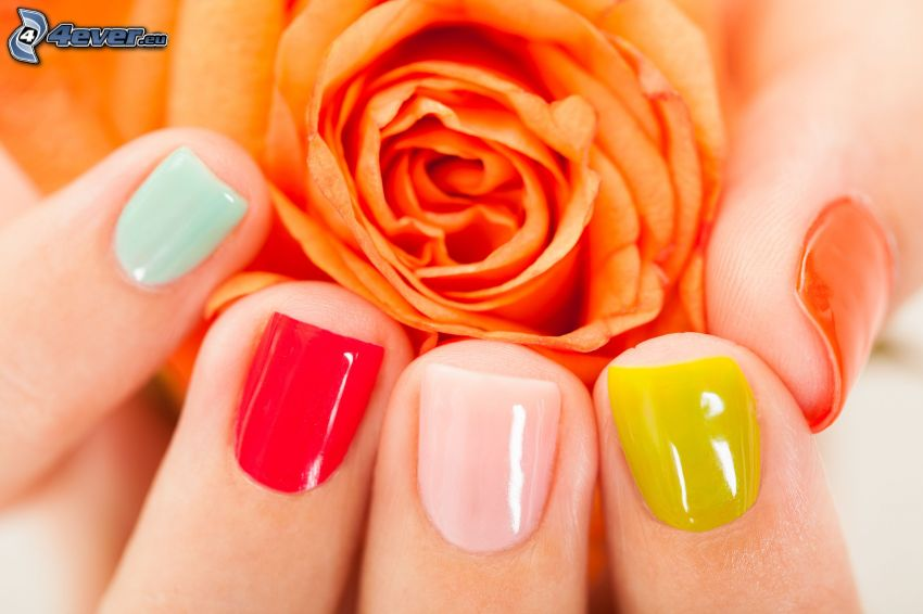 pomalowane paznokcie, pomarańczowa róża, kolory