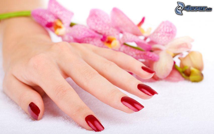 pomalowane paznokcie, ręka, Orchidea