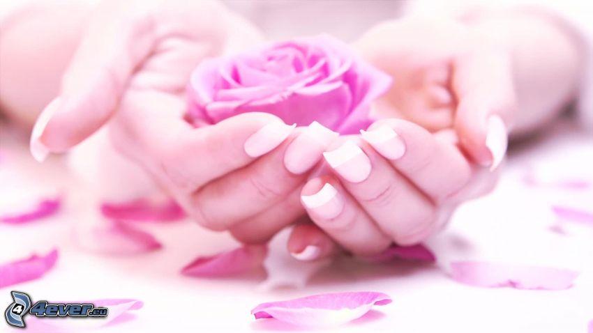 pomalowane paznokcie, różowe róże, płatki róż