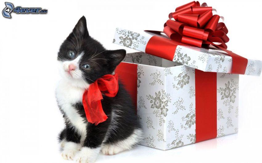 bożonarodzeniowy kotek, wstążka, prezent