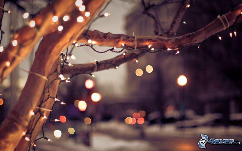 drzewo, konary, światełka