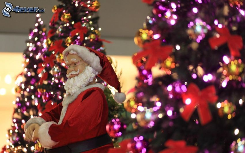 Santa Claus, choinka