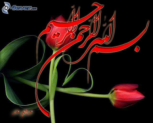 emblemat, czerwone tulipany