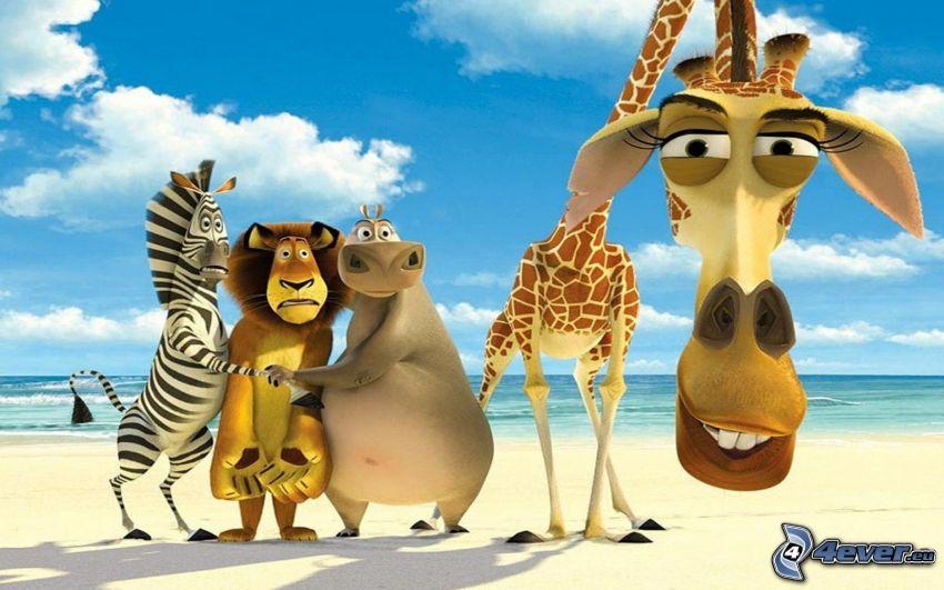 Madagaskar, zebra z Madagaskaru, lew, hipopotam, żyrafa z Madagaskaru