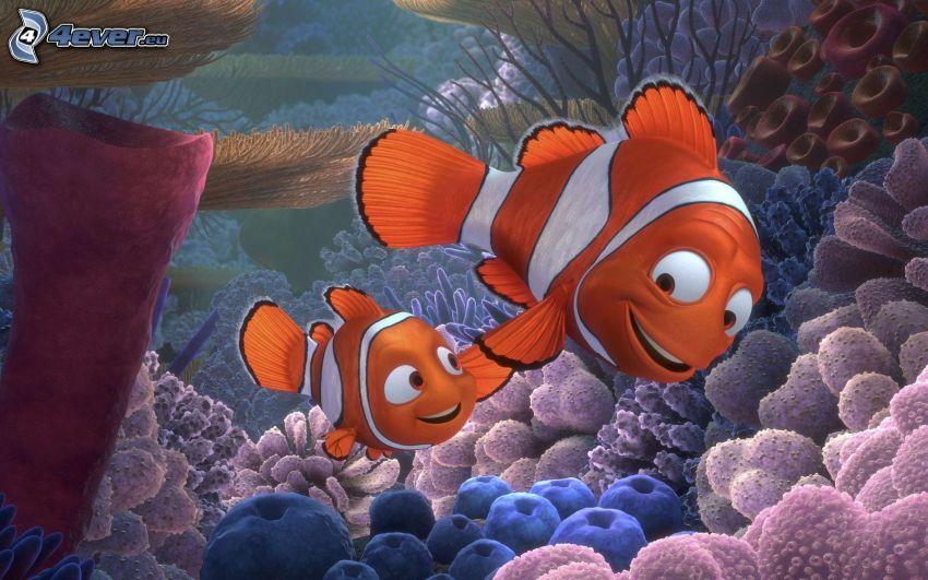 Nemo, tatuś, rybka klaun, sasanki