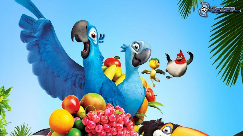 Rio, bajka, papuga Ara, owoc, jabłko, winogrona, grejpfrut
