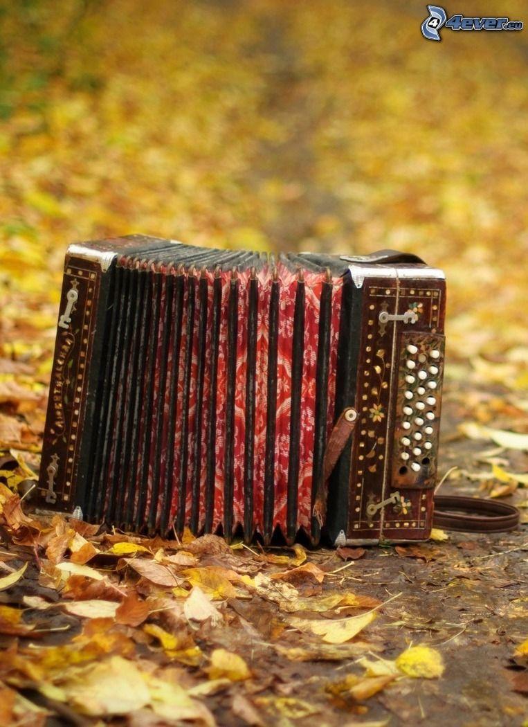 akordeon, jesienne liście