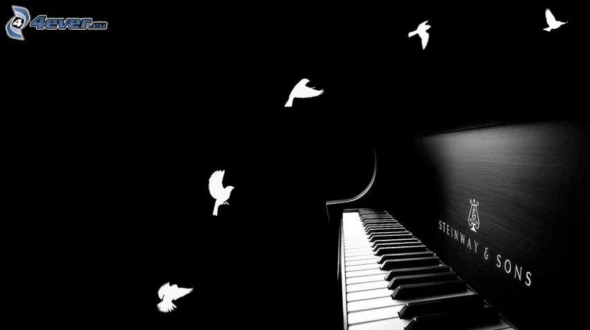 fortepian, gołębice