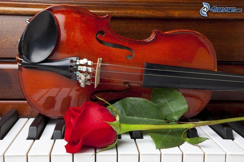 skrzypce, czerwona róża, fortepian