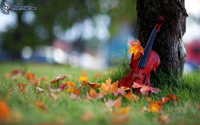 wiolonczela, opadnięte liście
