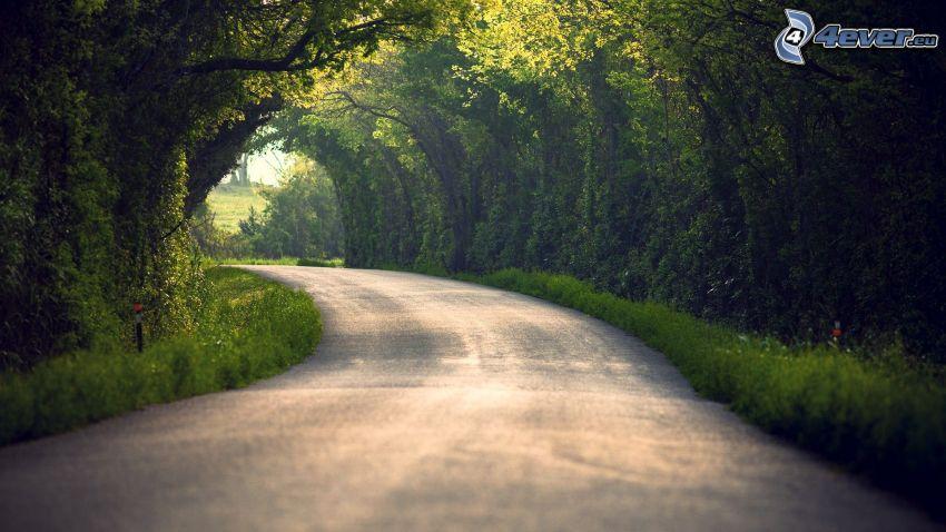 Droga przez las, zielony tunel, drzewa