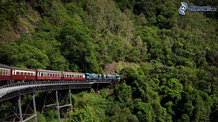 pociąg, las, most kolejowy