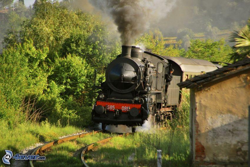 pociąg parowy, zielone drzewa