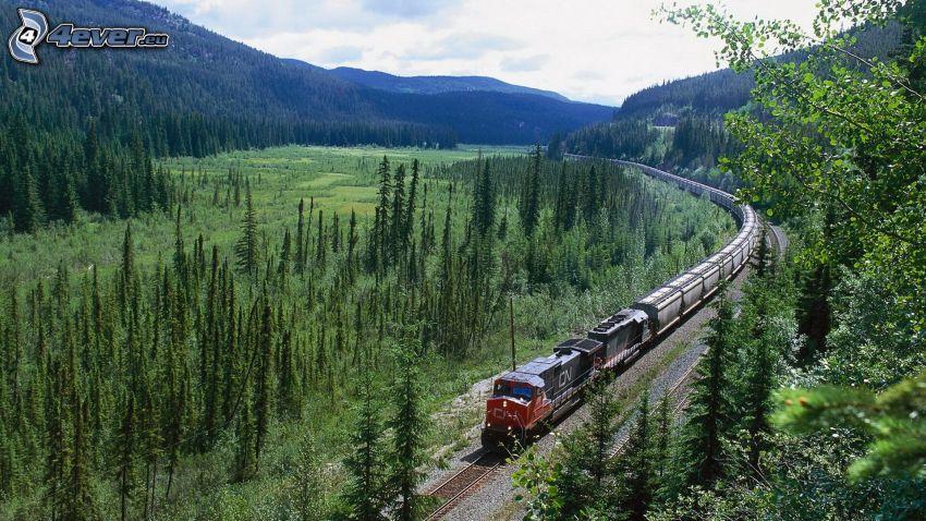 pociąg towarowy, las, łąka