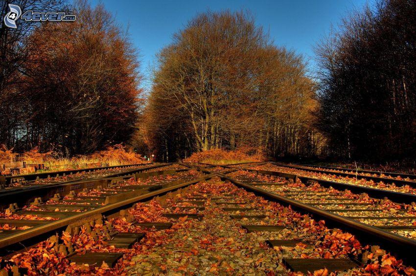 tory kolejowe, jesienny las, Jesienne liście