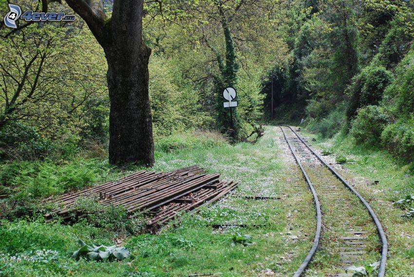 tory kolejowe, las, znak drogowy
