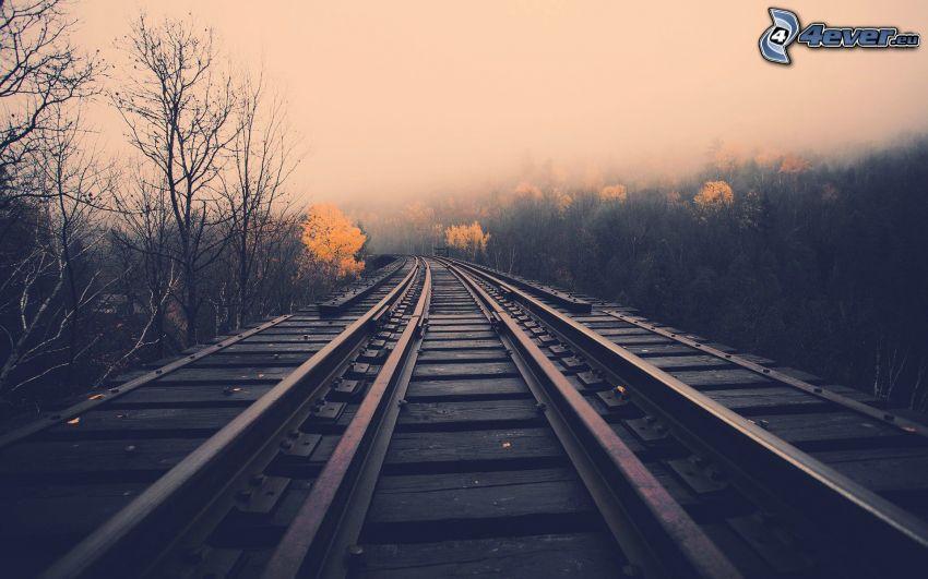 tory kolejowe, mgła, las