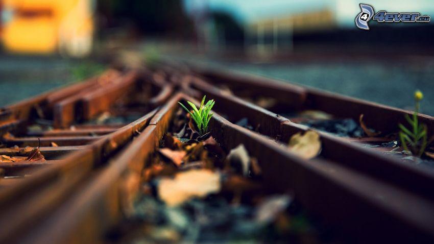 tory kolejowe, źdźbła trawy