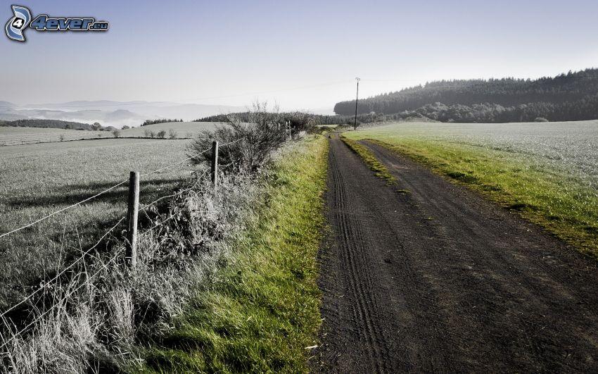 polna droga, płot, łąka