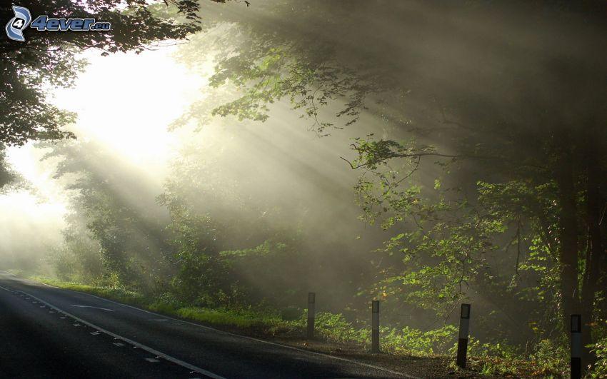 promienie słoneczne, ulica, drzewa