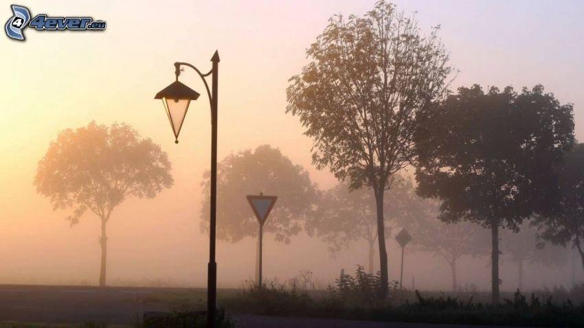 skrzyżowanie, znak drogowy, uliczne oświetlenie, drzewa